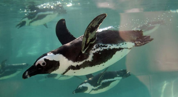 到底是不是游客惹的祸?新西兰企鹅死亡引争议