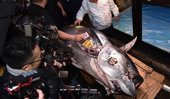 高达2亿日元!日本丰洲市场迎金枪鱼新年首拍