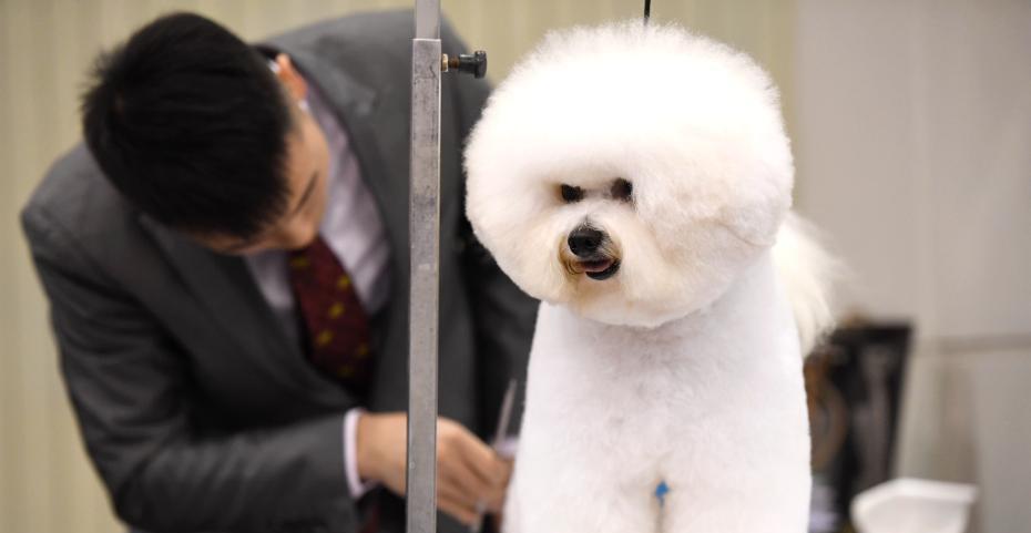 宠物行业越来越热 市场不规范法律法规尚存空白
