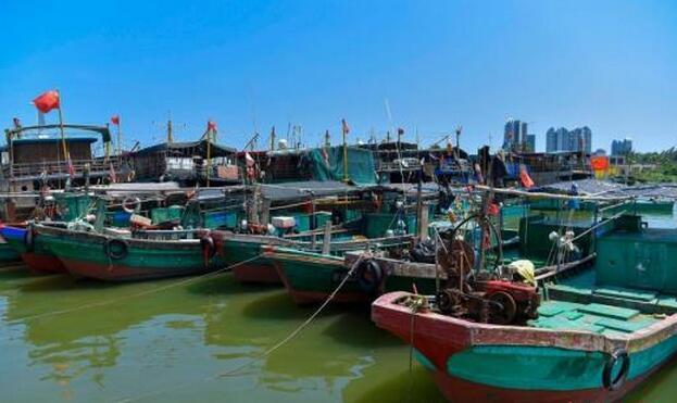 农业部发布伏季休渔期特殊经济品种专项捕捞许可