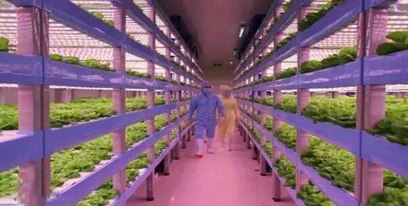 探访LED植物工厂:中国有了自己的最高级农业