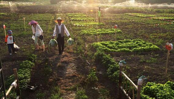 全国纳入名录家庭农场近60万家 经营土地1.6亿亩
