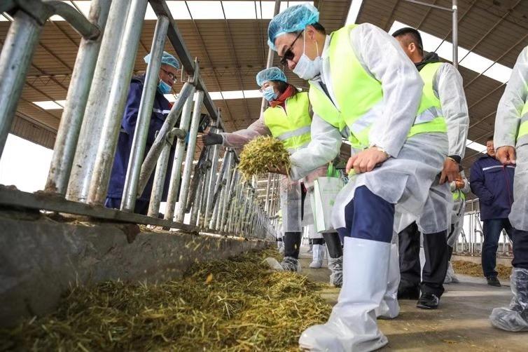 中粮集团蒙牛乳业:一滴牛奶的扶贫力量