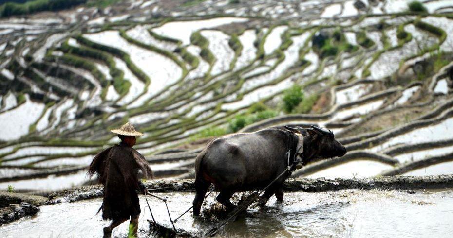福建尤溪联合梯田获颁全球重要农业文化遗产证书