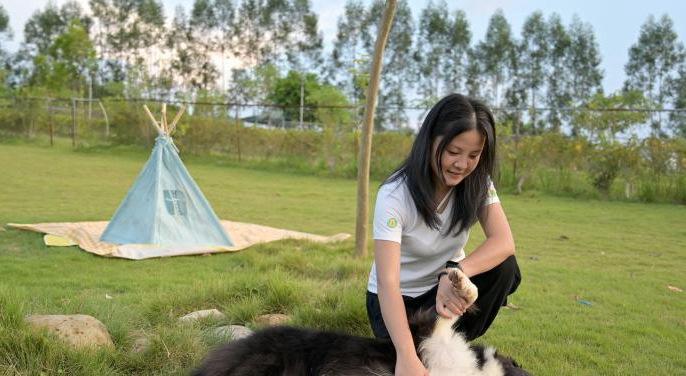 中国拟立法规定:携带犬只应佩戴犬牌并系犬绳
