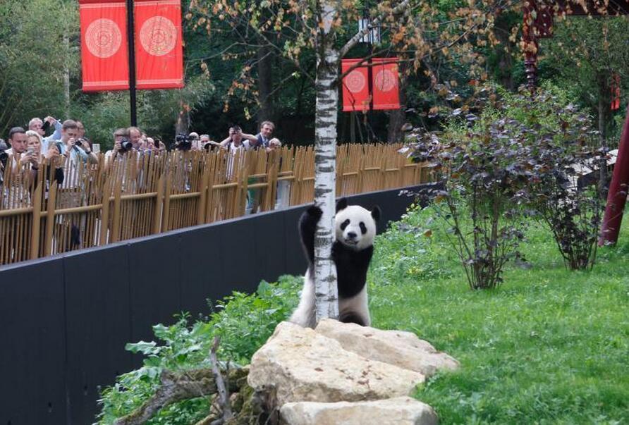 """中国大熊猫""""武雯""""、""""星雅""""见面"""