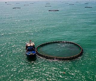 航拍亚洲最大深水网箱养殖基地
