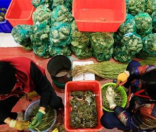 杭州捆蟹工日捆上千只蟹 月工资过万