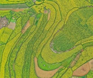 春意盎然 航拍贵州六枝万亩油菜花田