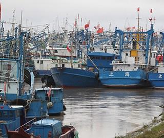 """台风""""安比""""登陆上海 船舶进港口避险"""