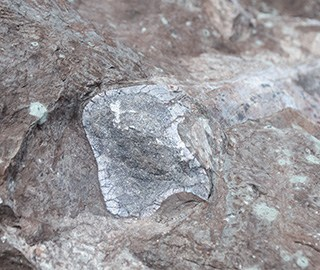 广西东兴市发现侏罗纪时期恐龙化石