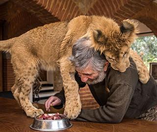 夫妻俩家里养狮子 互动起来让人羡慕