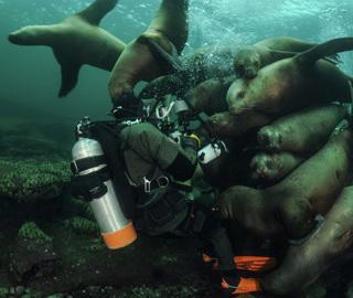 """潜水员遭到海狮""""强势围观"""""""