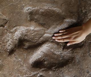 探访重庆綦江地质公园 有650枚恐龙脚印