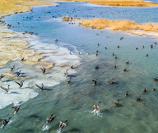 中国最大盐湖吸引众多珍稀鸟类过冬