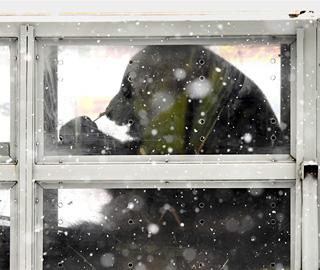 中国大熊猫抵达芬兰 开启15年旅居生活