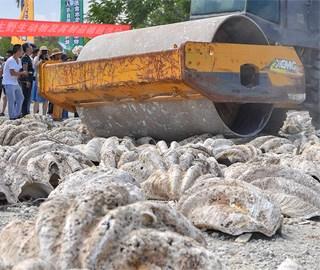 海南销毁近40吨罚没水生野生动物及制品