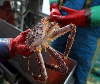 【图刊】在北极圈放牧捕蟹是什么体验
