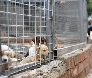 """""""宠物盲盒""""动物住进救助中心"""