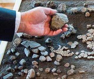 德国发现1100万年前棱皮龟遗体碎片