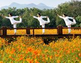 湖北秭归提升柑橘产业综合效益促进柑农增收