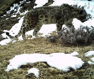 青川藏三省区交界处拍到多种野生动物