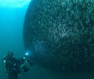 大量�鱼被鱼网捕获场面壮观