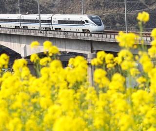 开往春天的列车 穿梭油菜花田美如画