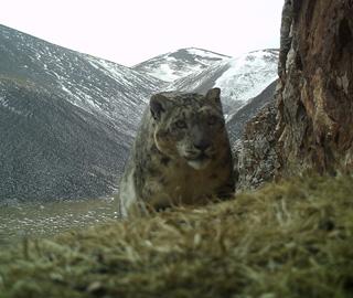 青海阿尼玛卿山发现多种野生动物