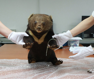 罗湖海关查获走私濒危动物黑熊标本