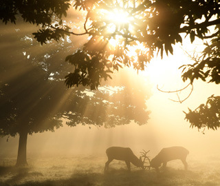 英国里士满公园晨曦薄雾景色迷人