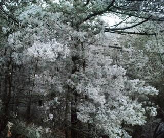 安徽安庆现雾凇处处银装素裹玉树琼枝