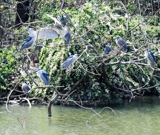 """福州高校校园湖心岛变""""鸟巢"""""""