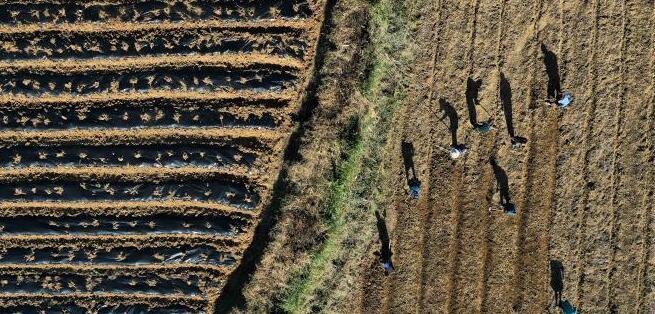贵州丹寨:霜降至 农事忙