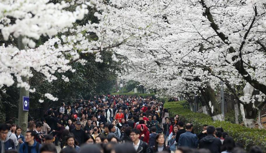 武汉大学回应赏樱游客冲突事件:其中一人未预约