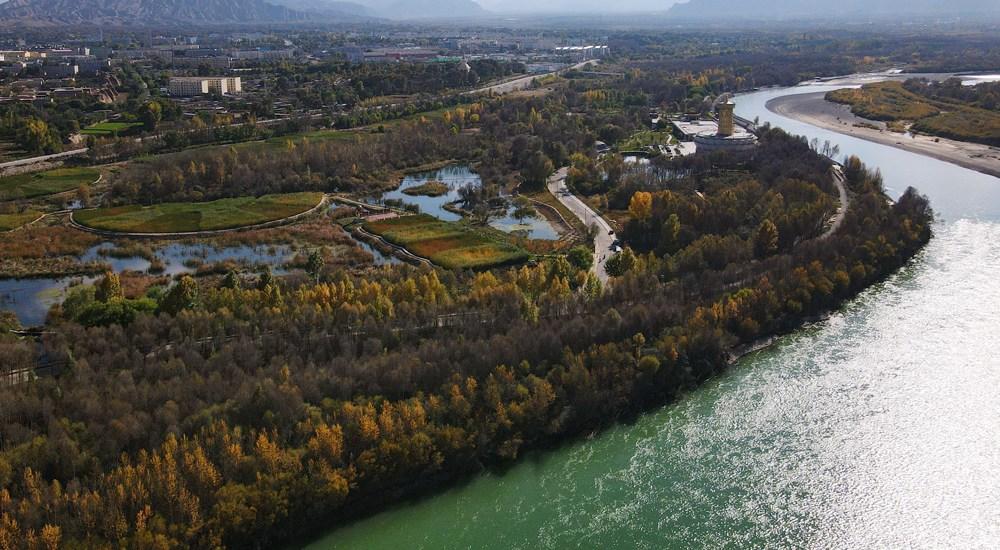 青海:黄河岸畔水生态修复效果显著