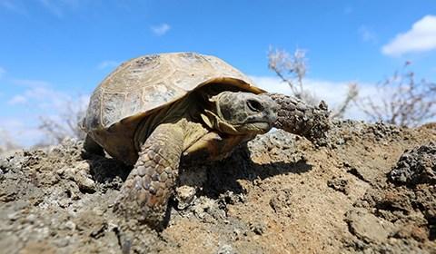 4月23日,新疆艾比湖湿地国家自然保护区管护员巴特乔龙在观察新发现的四爪?#28966;輟? onmouseover=