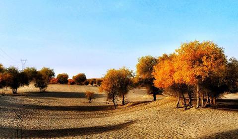 10月16日,新疆和静县境内乌拉斯台农场金色的胡杨与苍茫的沙漠交相辉映,成为该县及周边游人争相观赏的美景。