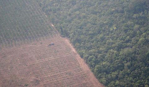 """卫星数据显示,2019年亚马逊热带雨林火灾数量激增,比2018年同期增加逾8成,""""地球之肺""""正面临不能承受之重。"""