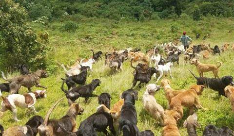 哥斯达黎加的Territorio de Zaguates被称为流浪狗之岛,这里是流浪狗们的天堂。