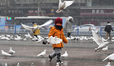 1月5日中午,河北石家庄迎来了2020年的第一场雪。很多市民走向户外,赏雪、嬉戏。