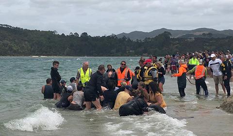 当地时间1月4日,新西兰北岛的海滩上一头至少有11头鲸鱼集体搁浅。