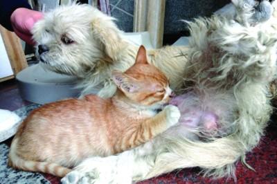 场内有一只猫和一只狗