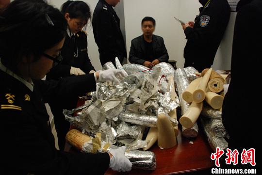 上海海关破获建关以来最大旅检渠道象牙走私案