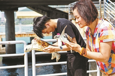 三亚放生海龟最高开价5万景区从养殖场大量购买