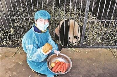 秦岭4只大熊猫接连死亡病毒变异专用疫苗仍空缺