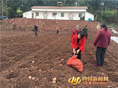 """经商女成""""红薯妹""""当职业农民年产值超600万"""