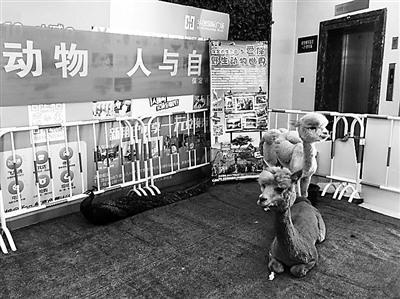 商场宣传保护动物展出野生动物被指状况不佳(图)