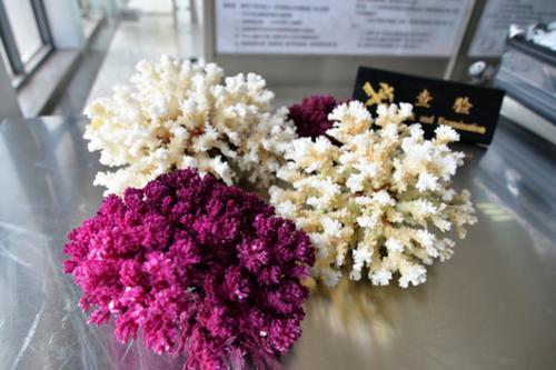 南京海关查获违规携带进境珊瑚制品