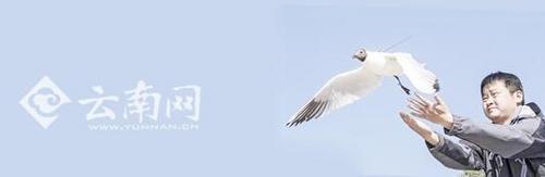 昆明市采购鸥粮30吨62处免费投喂保证红嘴鸥顺利越冬